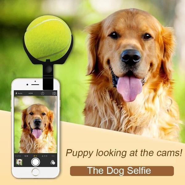 Dog Selfie Stick & Ball
