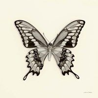 Framed Butterfly VI