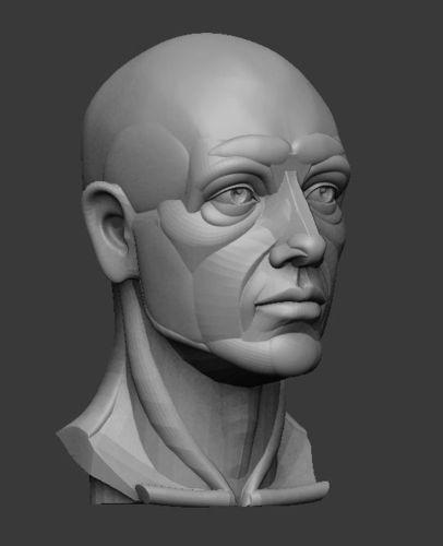 planar simplified male head 3d model obj stl ztl 2   anatomy
