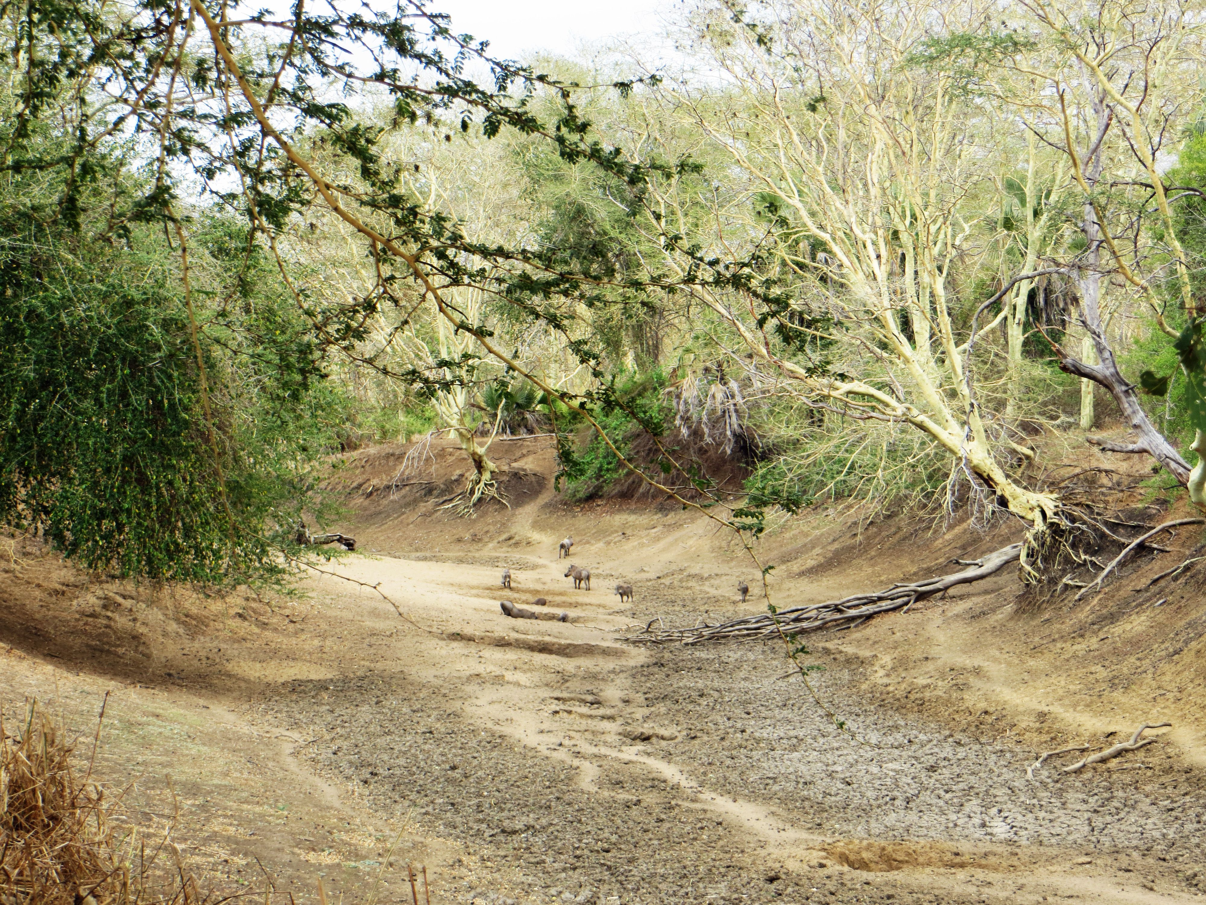 Dried up River