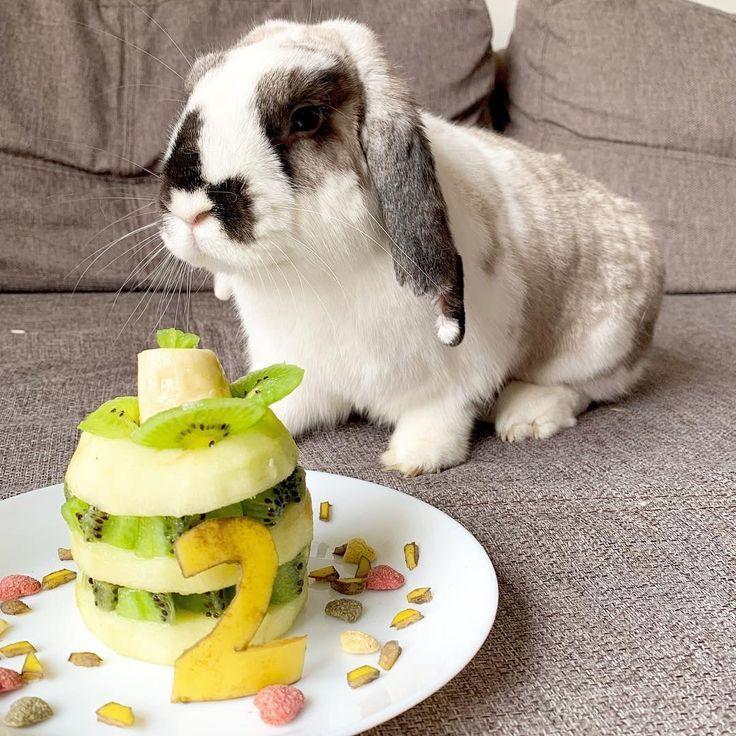 So Machen Sie Ihr Kaninchen Glucklich Diy Kaninchen Kaninchen