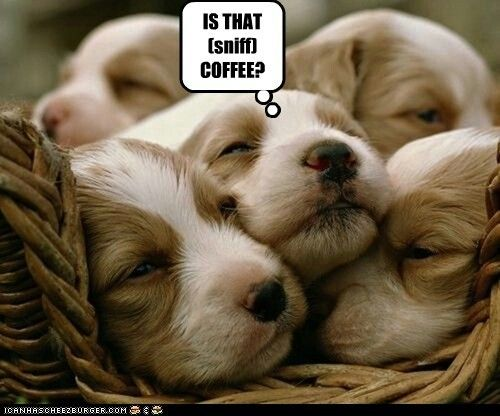 Is that (sniff) coffee?