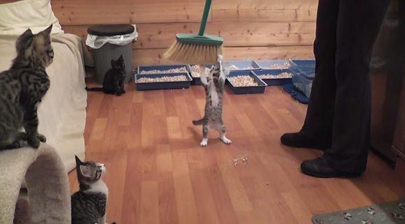 子猫 踊る