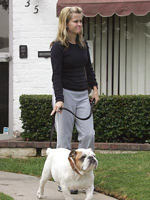 Rwitherspoon Celebrity Dogs English Bulldog Puppies Famous Dogs