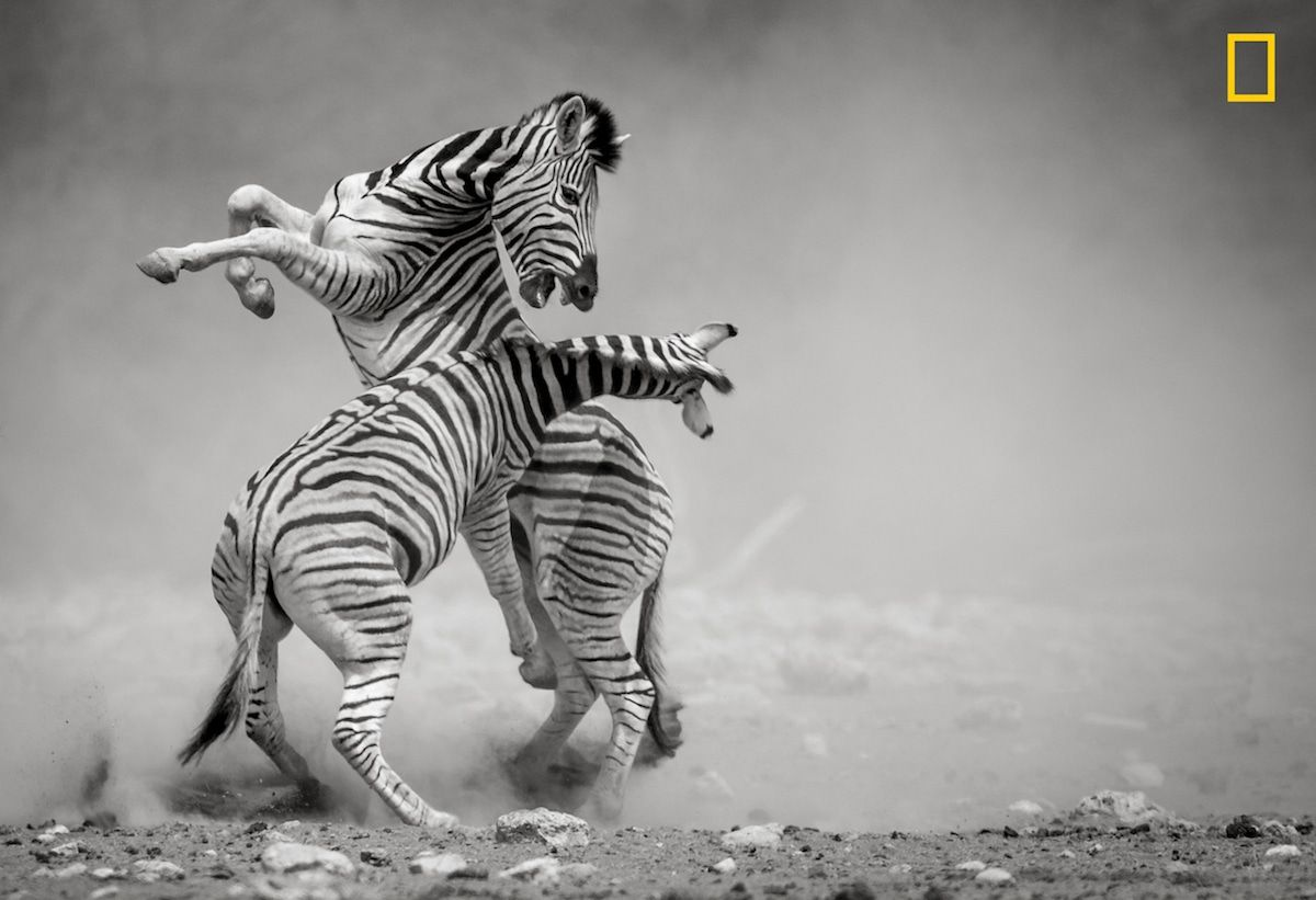 National Geographic Nature Photographer Of The Year 2017 More Incredible Entries From The 2017 National Geographic Nature Photographer Of The Year Contest Wildlife Photography National Geographic National Geographic Photography Nature Photographs