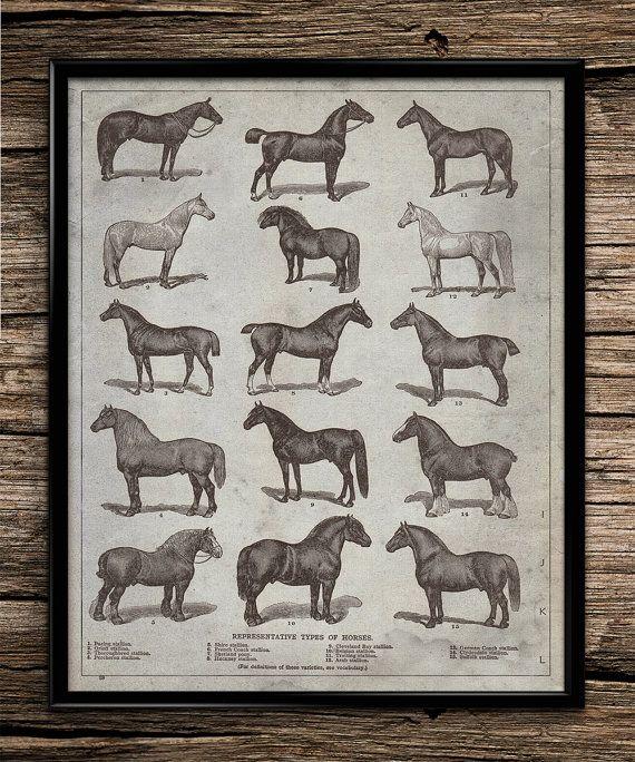 Vintage Types Of Horses
