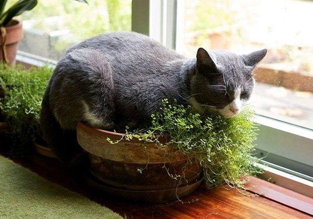 Diy Indoor Cat Garden For Cat Lovers Cat Plants Indoor Cat Garden Cat Garden