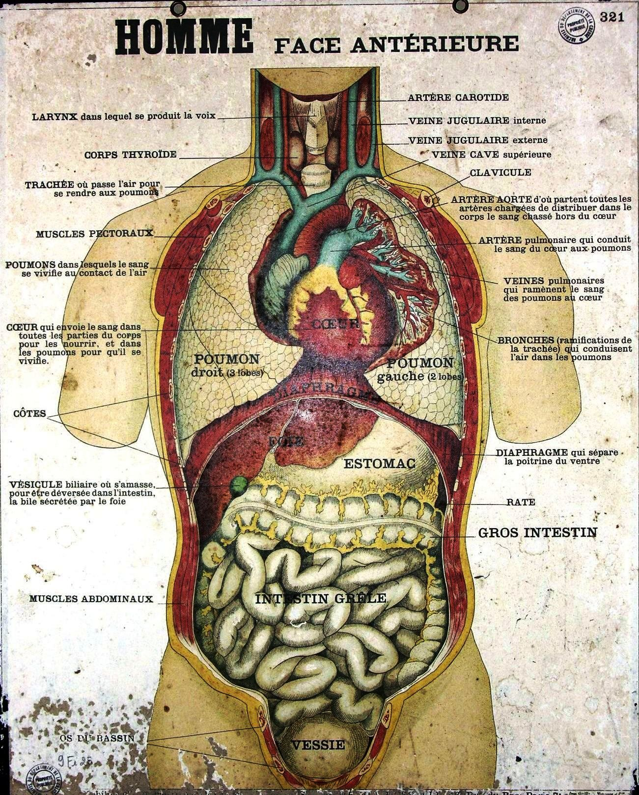 Vintage French; Anatomy poster | boys rooms | Pinterest | Anatomy ...
