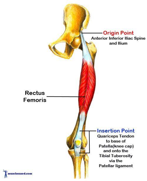 stretching & strengthening the rectus femoris | Workout | Pinterest ...