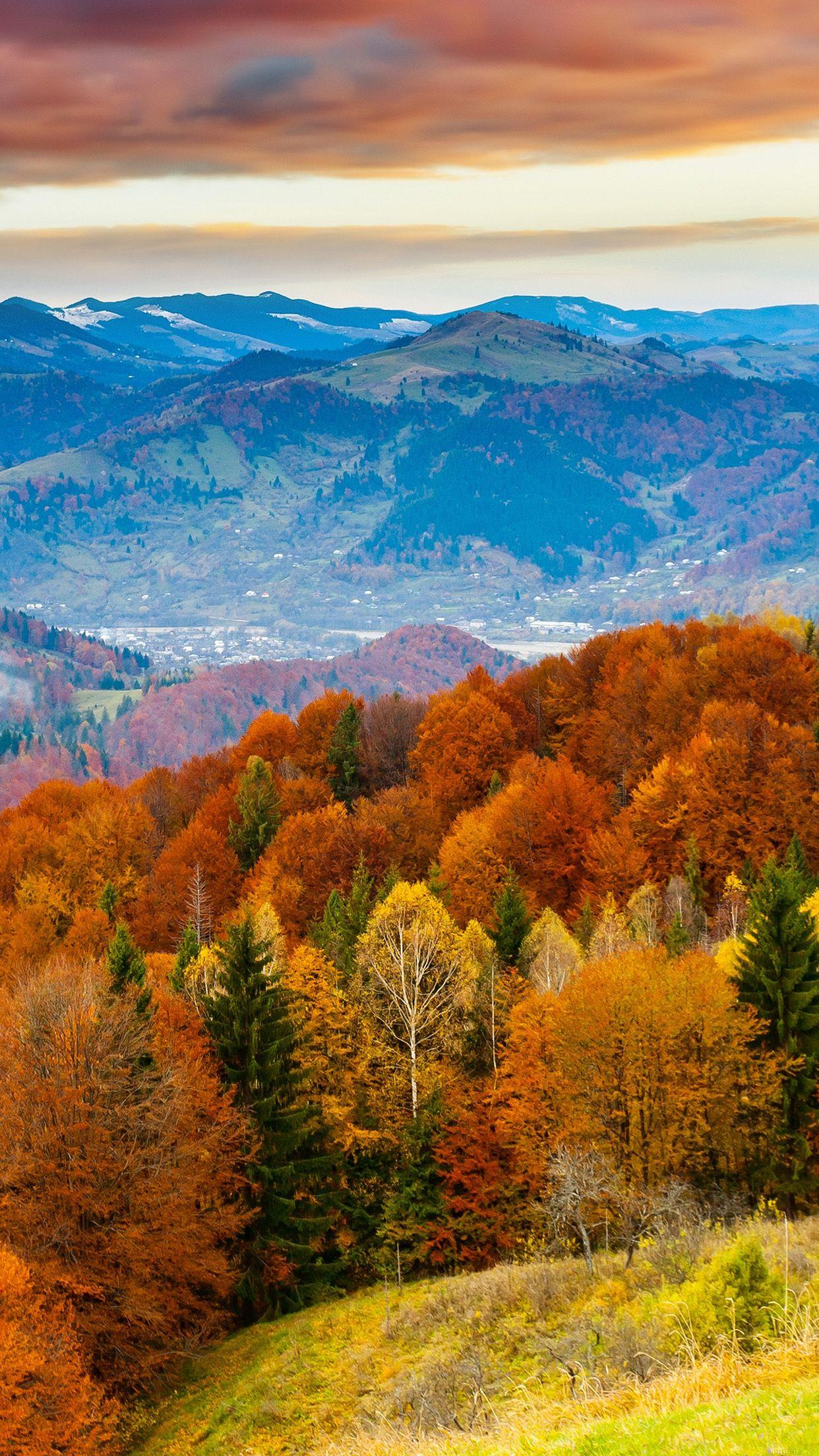 Autumnorange Autumn Orange Leaves Focus X Wallpaper