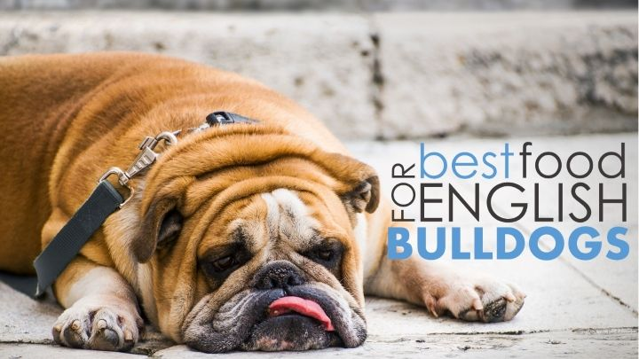 Best Dog Food For English Bulldogs 5 Great Options 1 Bad Best Dog Food English Bulldog Puppy Time