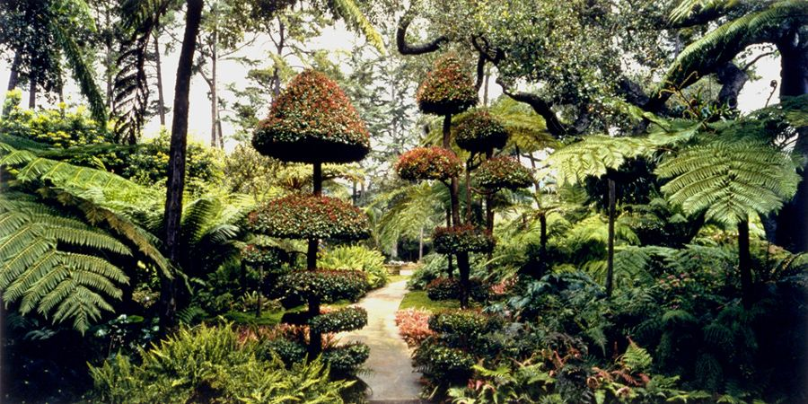 Fern Garden with Tpoiary,