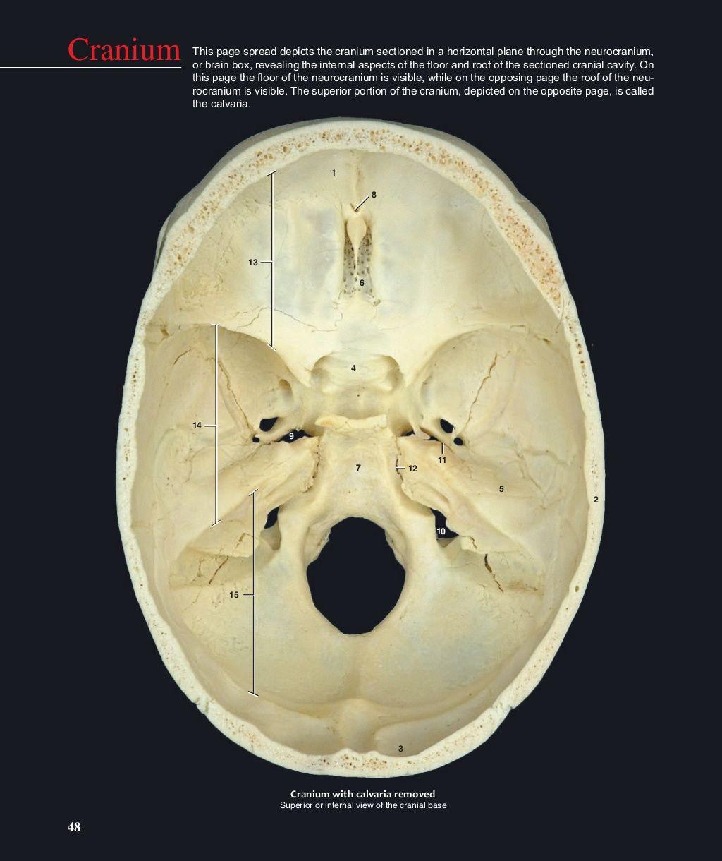 49 1 Frontal bone 2 Parietal bone 3 Occipital bone 4 Sphenoid bone 5 ...