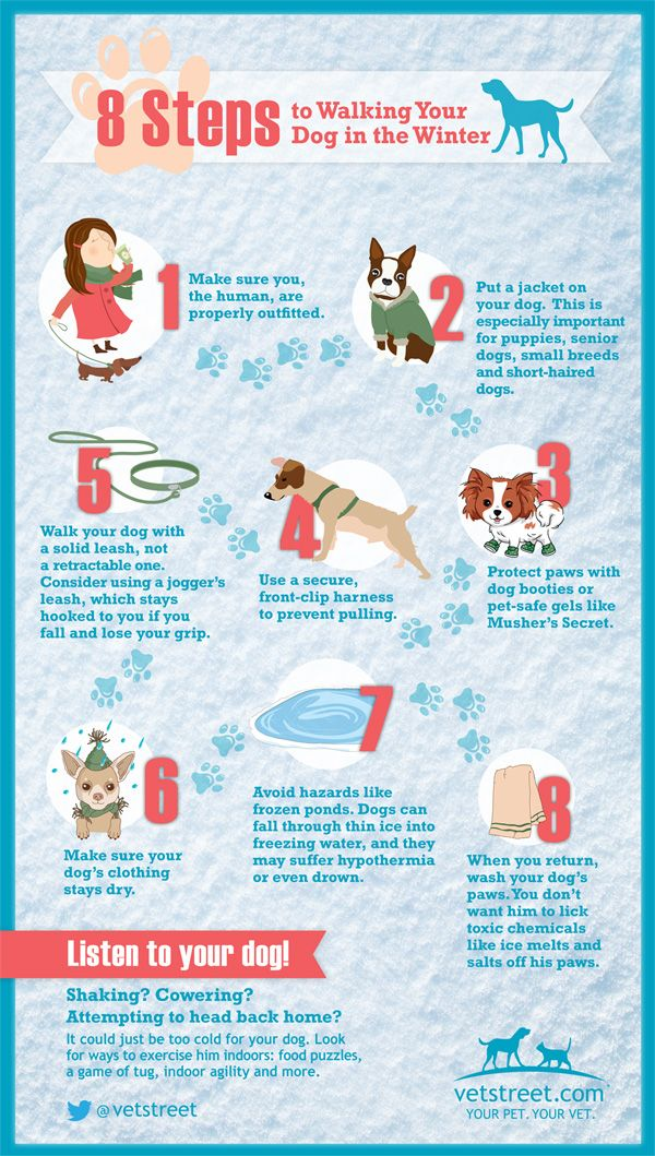 8 steps to walking the dog in the winter   infographic