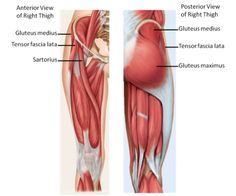25++ Where is the gluteus maximus trends