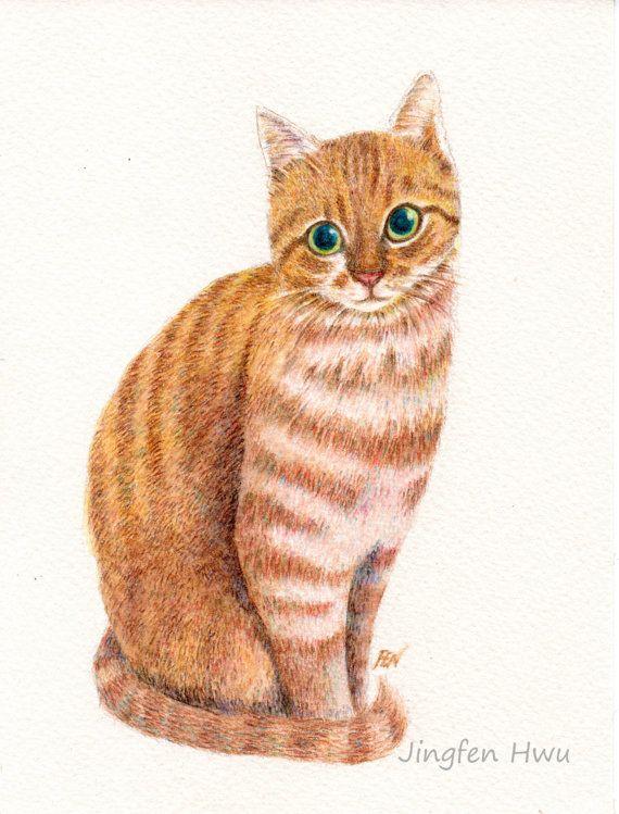 watercolor pencil drawing cat art print quota sweet ginger