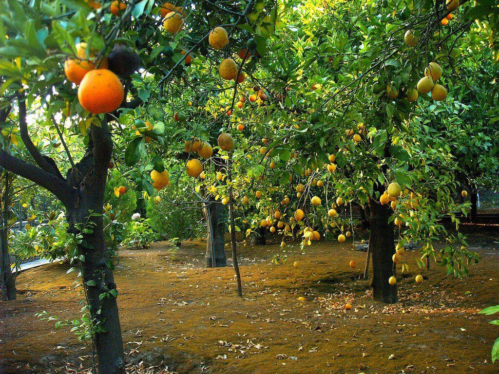 إنشاء بساتين الموالح Agriculture Pumpkin Patch Pumpkin