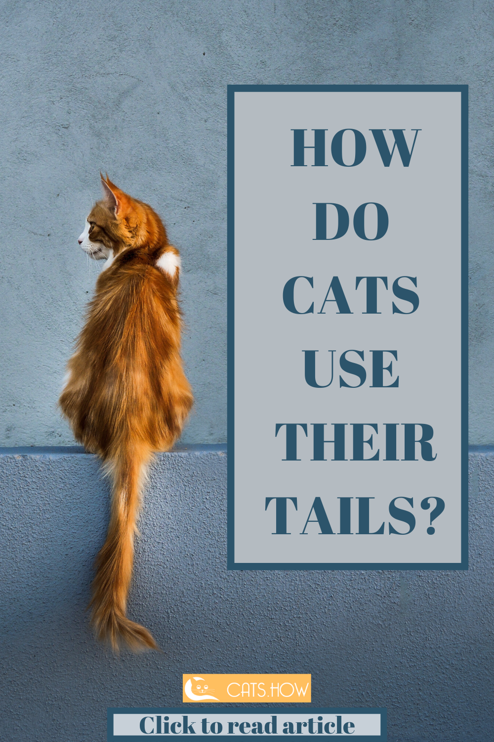 How Do Cats Use Their Tails With Images Cat Behavior Cat Love Quotes Cat Quotes Funny