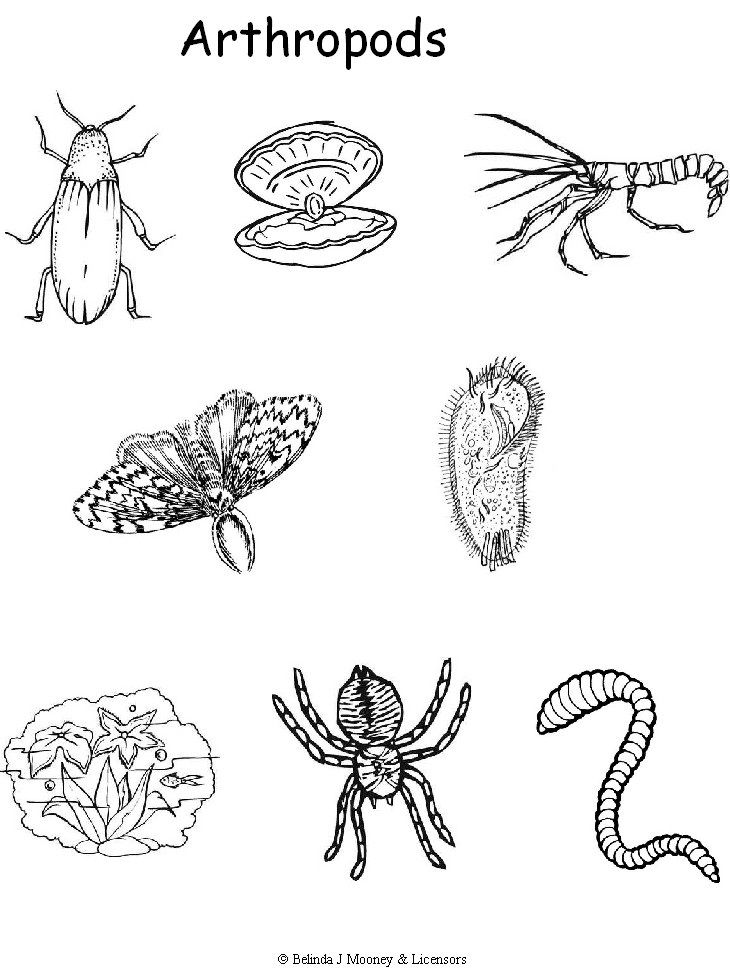 Examples of Arthropods Life science, Zoology, Coloring pages