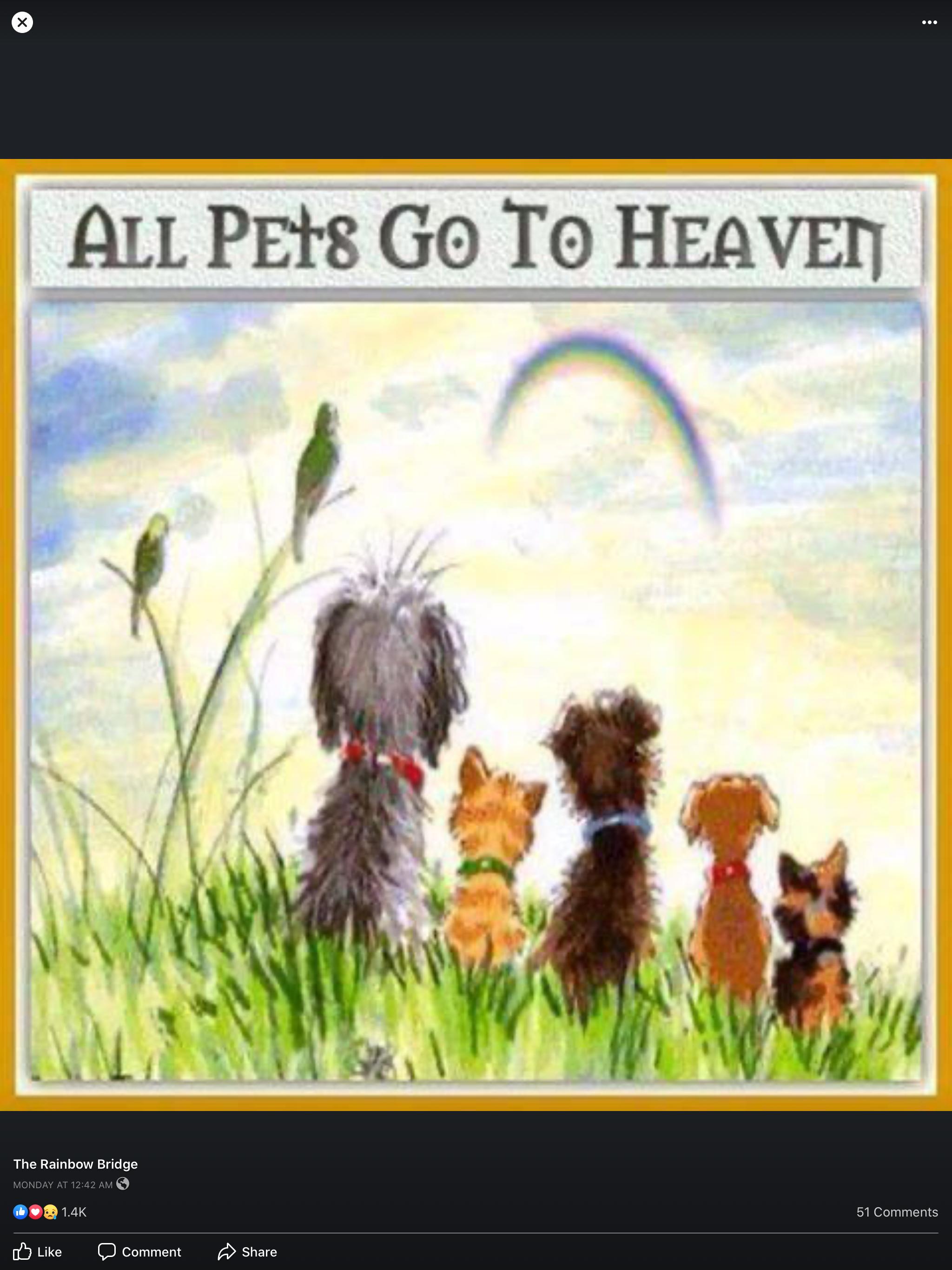 Idea By Jean Ann Schwichtenberg On Jean S Stuff Dog Sympathy Pets Rainbow Bridge