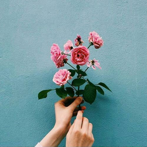 Roses And Colored Wall Indie Tumblr Photography Instagram Ideas