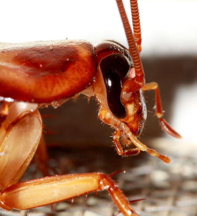 Como Acabar Con Las Pulgas En El Jardin Trucos De Hogar Y Jardin Cucarachas Plagas Pulgas