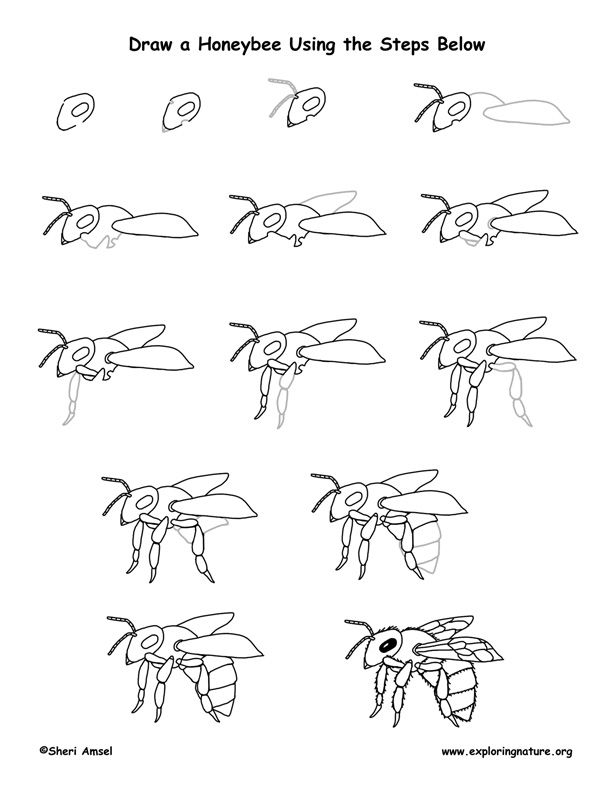 honeybee drawing lesson