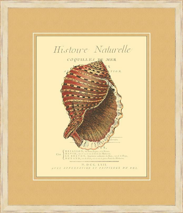 Coquilles De Mer IV Framed Wall Art | Products | Pinterest | Online ...