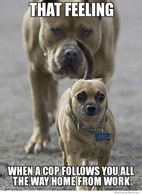 24 Hilarious Dog Memes With Captions To Brighten Your Day 24