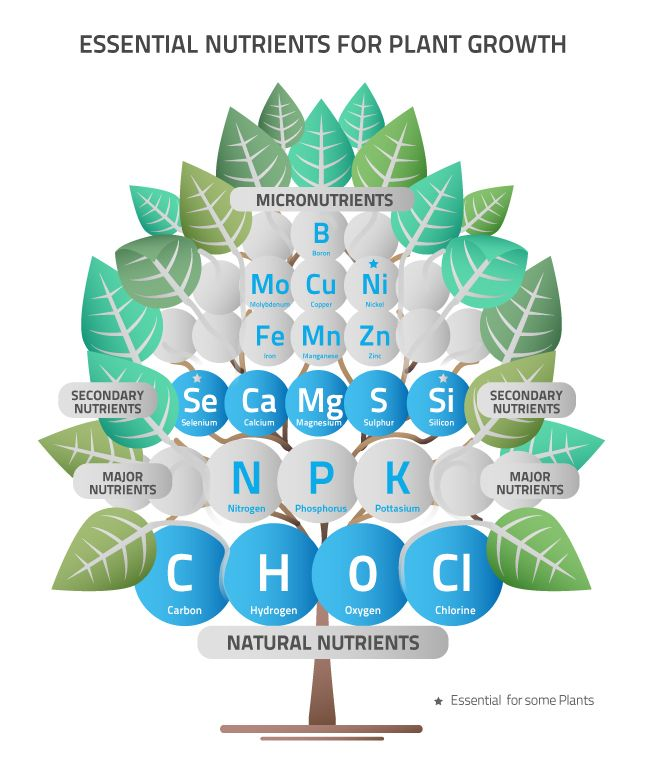 Nutrients Tree