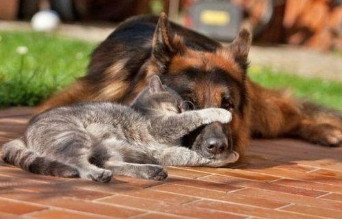 犬と猫がギュッ