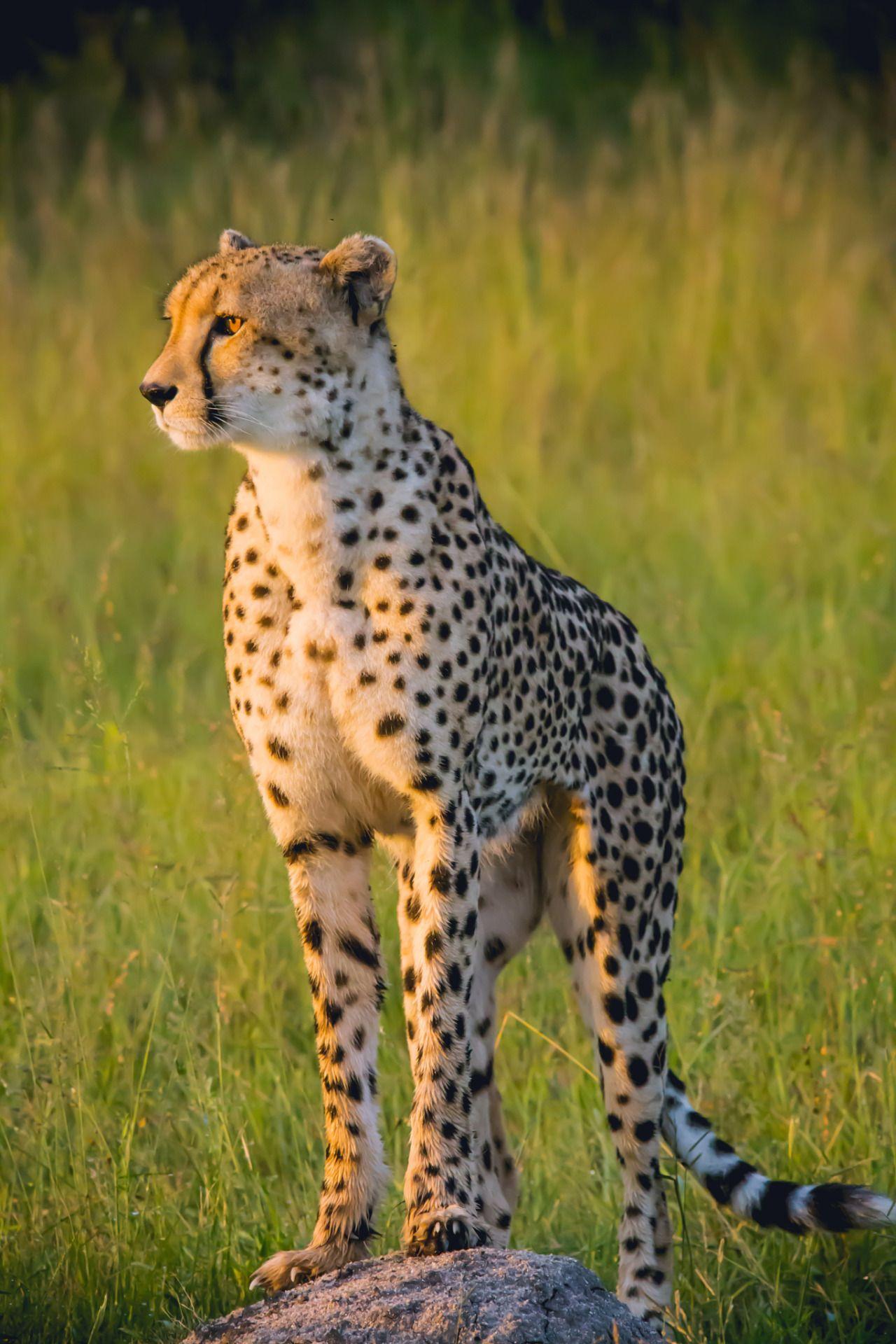 South Africa Sabi Sand Game Reserve Animals beautiful