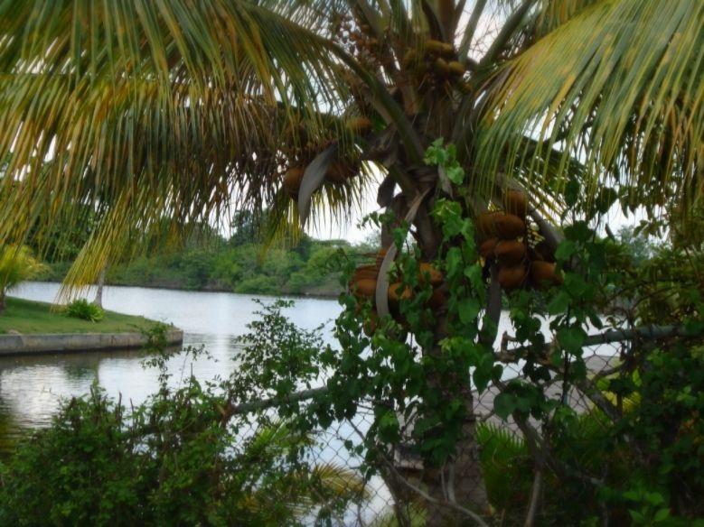 Bellas Palmeras, canales de Rio Chico