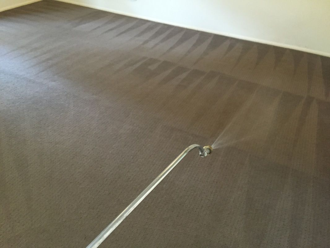 affordable gold coast carpet cleaning and pest control prices save