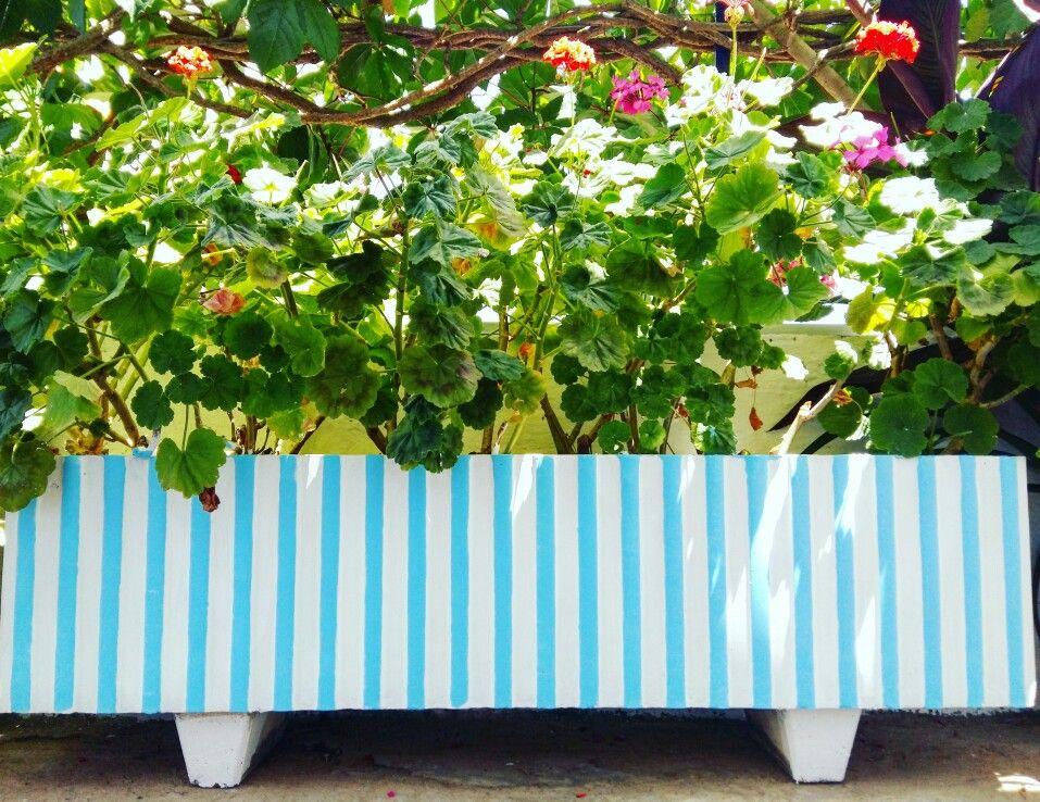 Brand new flower pot!! #angelos_apartments #Alonissos #Sporades #Greece #greekislands #discoveralonissos #visitalonissos