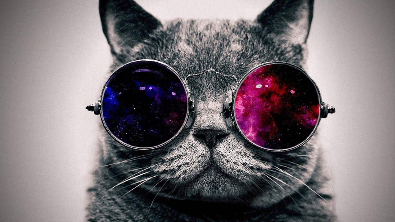 1366x768 Wallpaper Cat Face Glasses Thick Glasses Wallpaper Cat Glasses Hipster Cat
