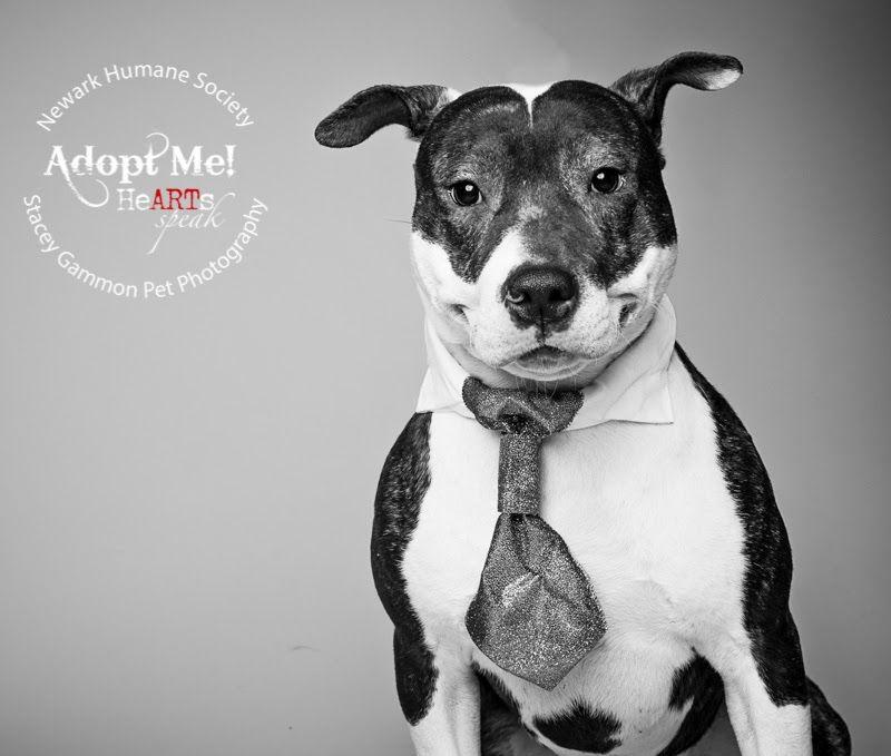 Adopt apollo from the Newark Humane Society. http//www
