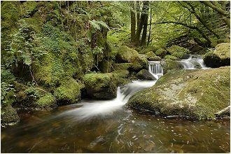 Morvan-ruisseaux-et-rivieres-Morvan-Bourgogne-France-Europe.