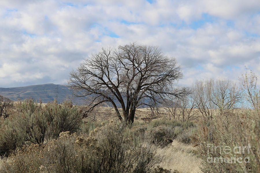 Photograph - One Tree With Sagebrush And Hillss by Carol Groenen #affiliate , #ad, #Ad, #Sagebrush, #Groenen, #Carol, #Tree