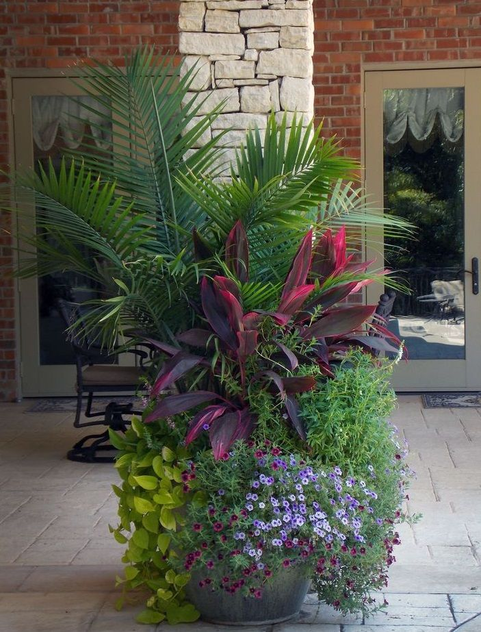 Large Tropical Plants Make A Bold Statement Contained Garden