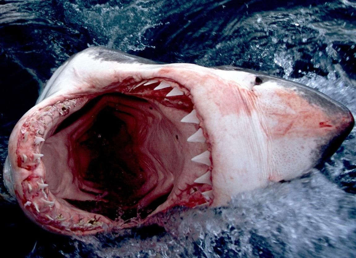 HQ Wallpapers Plus provides different size of Scary Deep Sea ...