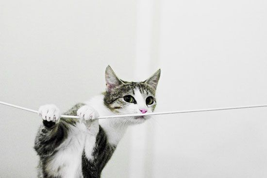 Cat Man Do Dr Arnold Plotnick Preventing Cats From Chewing Electrical Cords Cute Kitten Pics Kitten Pictures Animals