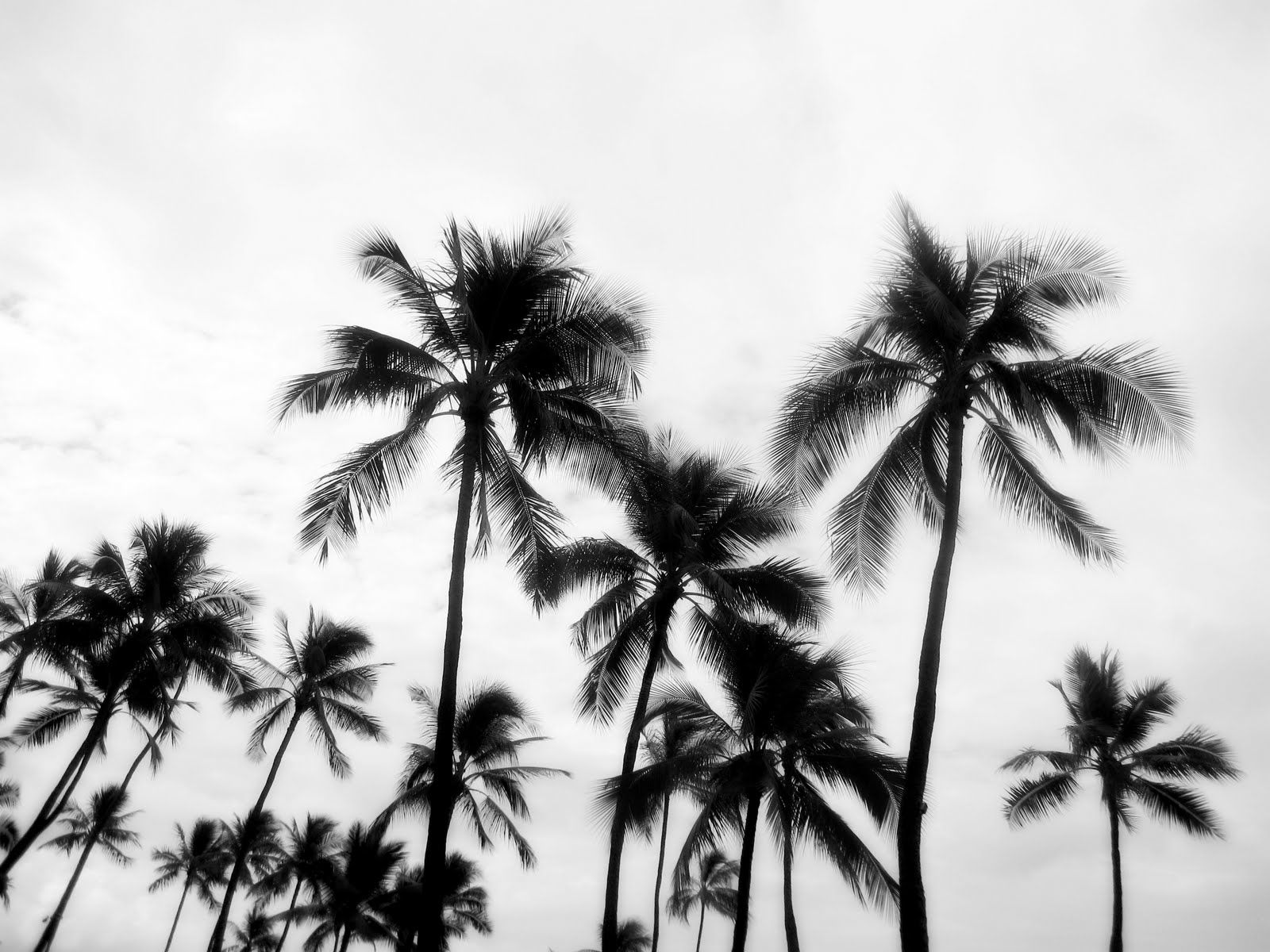 Palm Trees Tumblr Black And White Ideas 614886 Pool Design