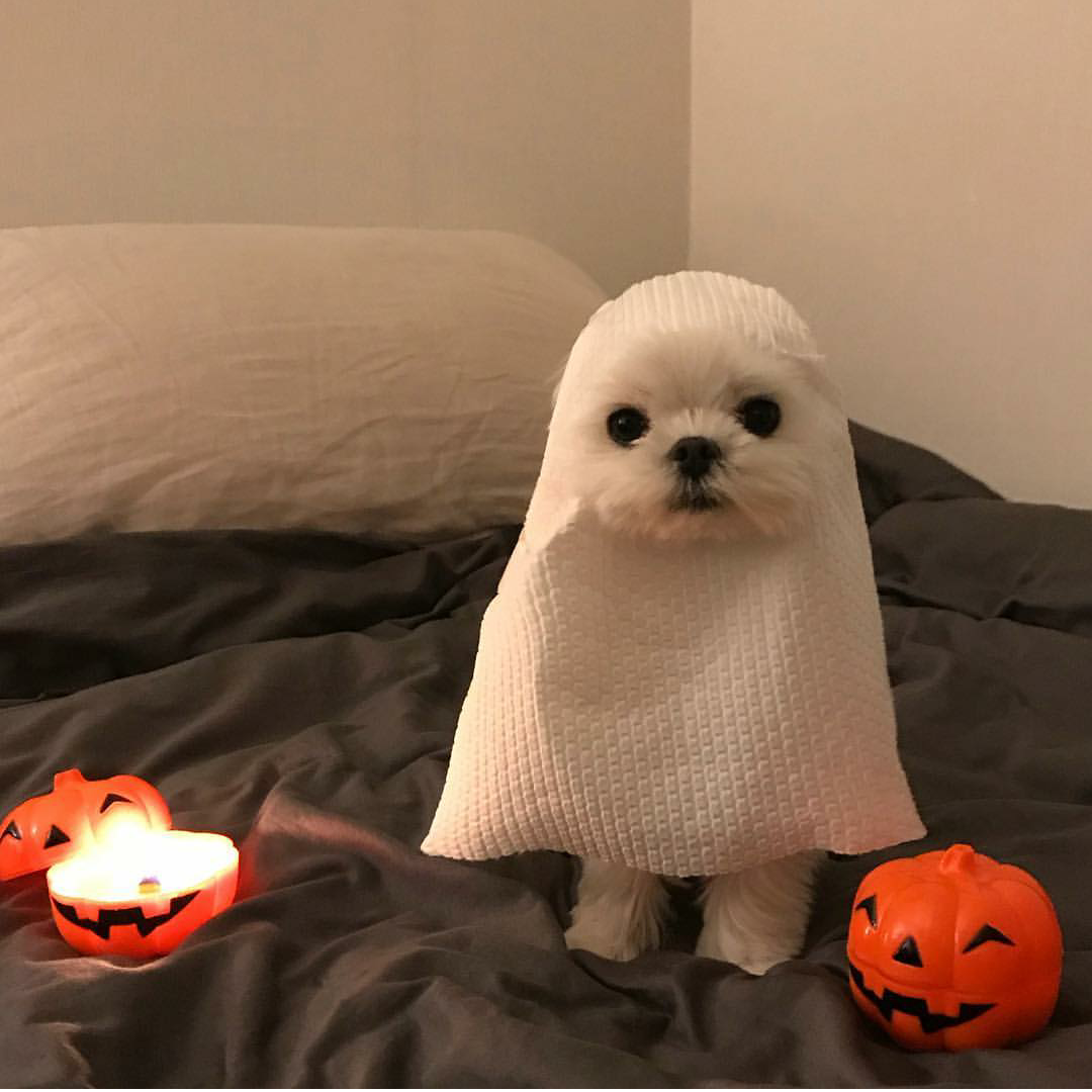 real paranormal encounter captured on camera peoplefuckingdying puppy halloween costume ghost