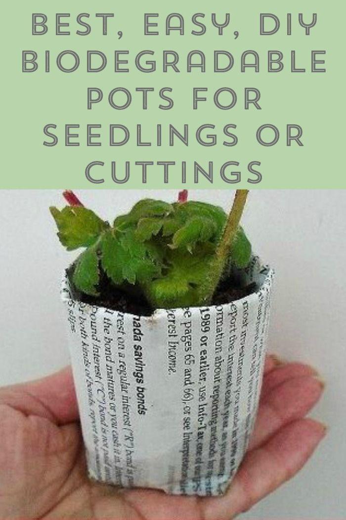Best Easy Diy Biodegradable Newspaper Pots For Seedlings 640 x 480