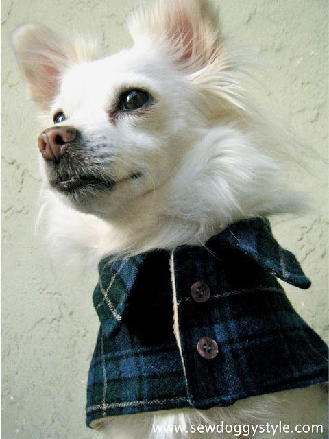 Sew DoggyStyle: DIY Pet Coat Pattern - Sewing it Together ...