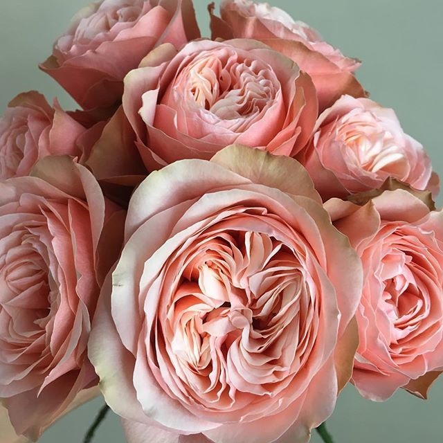 Kahala roses are everything. | Wedding Florals | Pinterest ...