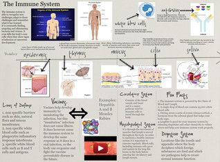 The immune system is a system of biological structures and processes within an organism that protects against disease. To function properly, an immune system must detect a wide variety of agents, known as pathogens, from viruses to parasitic worms, and distinguish them from the organism's own healthy tissue. #Glogster #ImmuneSystem