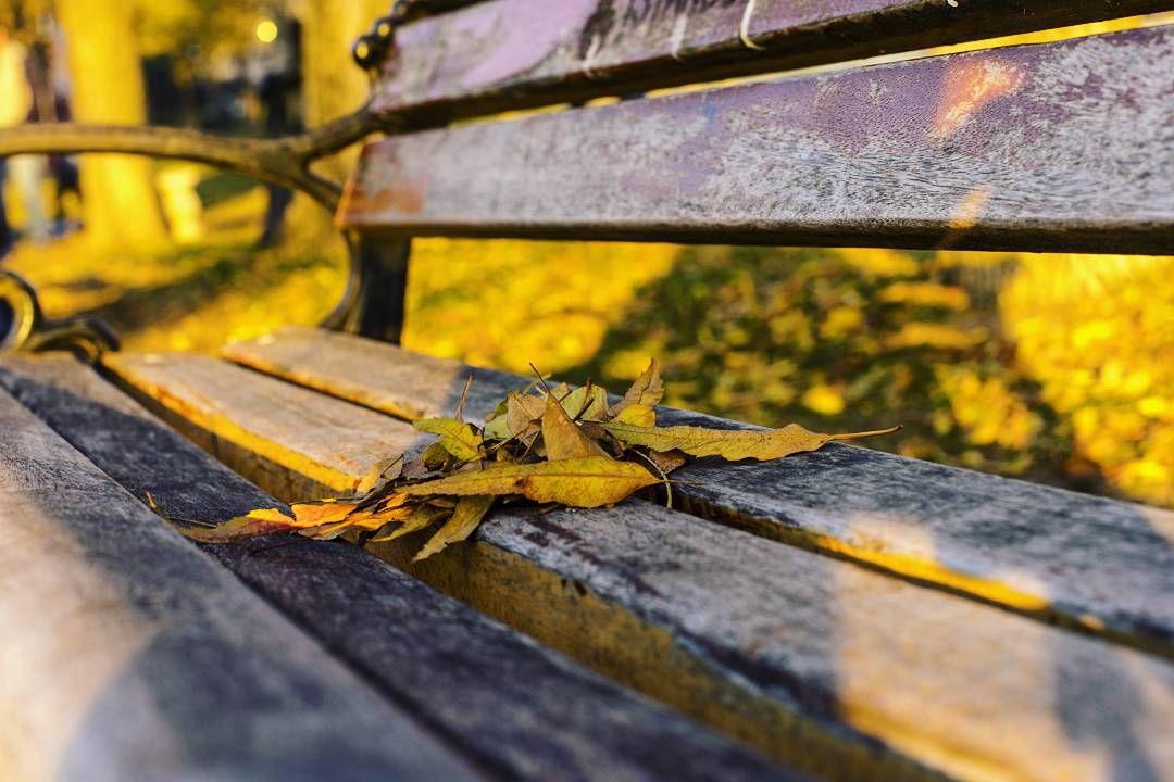 #sonbahar ve #sararmış #yapraklar
