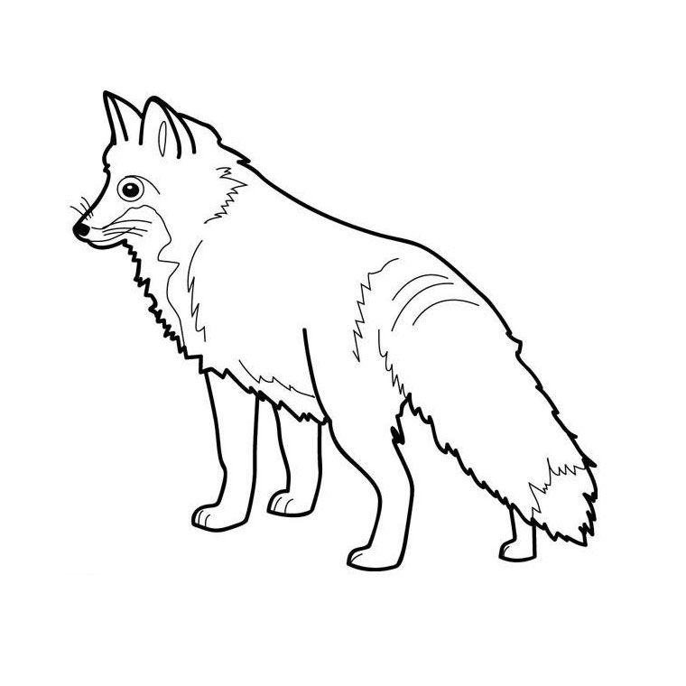 Renard polaire   Coloriage renard, Coloriage animaux ...